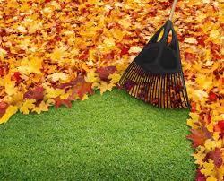 leaf-clean-up
